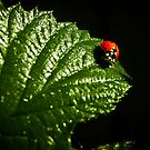 A Ladybug and Her Shadow by Neal Handloser
