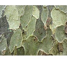 Gum Tree Trunk  Photographic Print