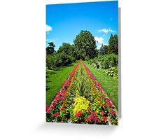Straight Lines ~ Pink Geranium Flowers, Dracaenas & Perennials under a Blue Sky Greeting Card