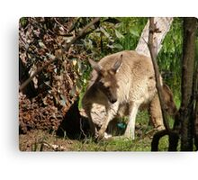 I'll Sneak away whilst mums not looking. Joey, back patio.S.Aust. Canvas Print