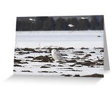 Snow buntings sailing past Snowy Momma Greeting Card