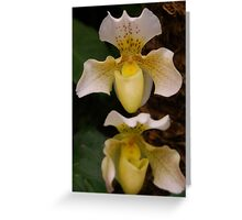 Orchidaceae Greeting Card