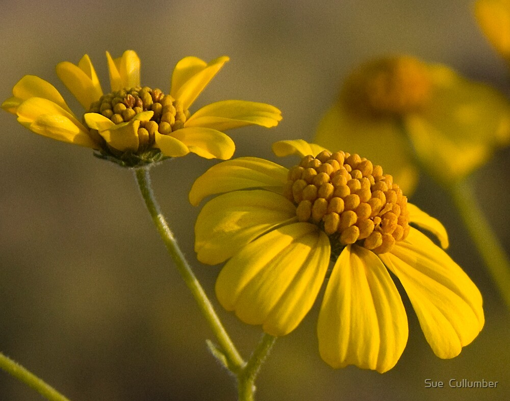 Simplicity by Sue  Cullumber
