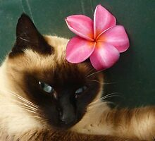 Aloha From Our Sleepy Cat by Hapatography