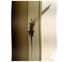 Anole Watching The Sun Rise Poster