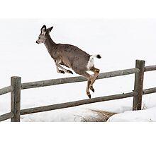 Black Tail Deer Photographic Print