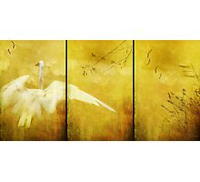 As Birds Fly Up..... Photographic Print
