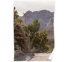 Red Rock Canyon, Las Vegas, Nevada Poster
