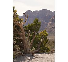 Red Rock Canyon, Las Vegas, Nevada Photographic Print