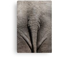 Funny Elephant Butt and Tail Canvas Print