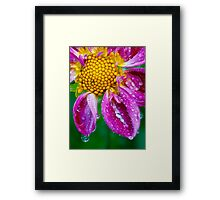 Weeping Dahlia - In Remembrance Framed Print