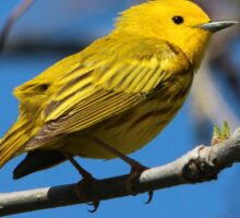 Male Yellow Warbler Sticker
