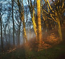 Castle Coch Grounds by Dave Ward