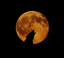 Silhouette of a Wolf Howling at a Full Moon by pdgraphics