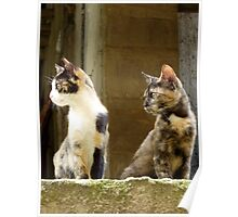 Athenian Cats Poster