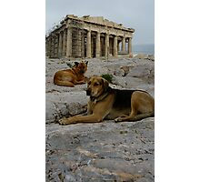 Acropolis dogs Photographic Print