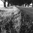 The Road Home by Matthew Jones