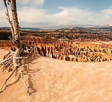 Bryce Canyon Survivor by Gregory J Summers