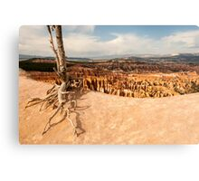 Bryce Canyon Survivor Canvas Print