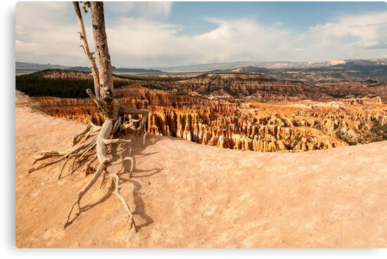 Bryce Canyon Survivor by nikongreg