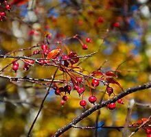 Fall Fruits  by Robert Meyers-Lussier