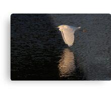 Snow over Water - Snowy Egret Metal Print