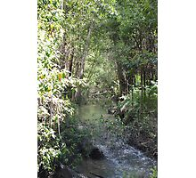 A creek in Tidbinbilla sanctuary Photographic Print