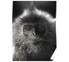 Monkey Glamour  Poster