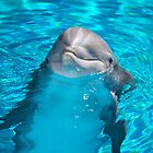 New Baby Dolphin by Heather Eeles