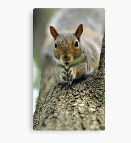 You're disturbing my lunch Canvas Print