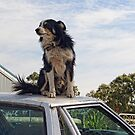 Top Dog by Maree Cardinale