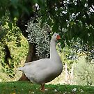 Taking a Moment, The Lone Goose 2009 by ArleneMartine