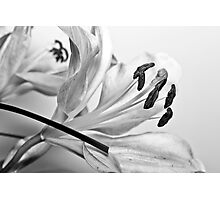 Faded Black and White Love Photographic Print