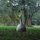 Hey There, The Lone Goose 2009 by ArleneMartine