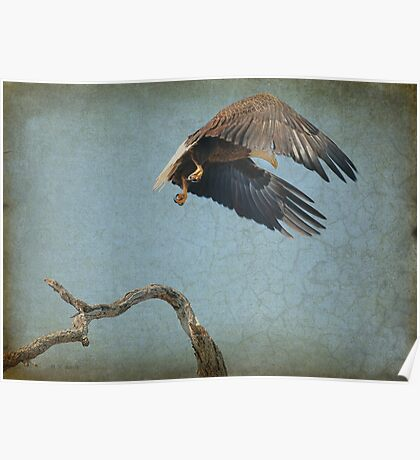 Eagle In Holly Hill Poster
