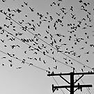 Flock by JRRouse