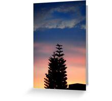 Norfolk Island Pine Sunset Greeting Card