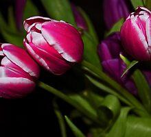 Tulips by Denise Wainwright