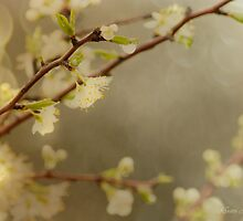 April Showers by kristijohnson