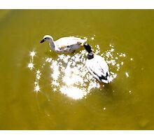 On Golden Pond Photographic Print