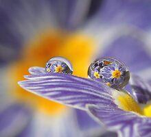 Raining primroses by Lyn Evans