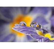 Raining primroses Photographic Print
