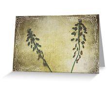 Dried Grape Hyacinths Greeting Card
