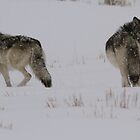 Checkin Their Backs by Ken McElroy