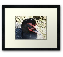 Darth Duck Framed Print