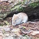 A Vole in the Hole by Mark Baldwin