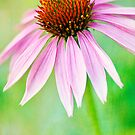 Bright Echinacea by Beth Mason