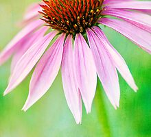 Bright Echinacea by Beth Mason