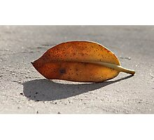 Leaf With Shadow Photographic Print