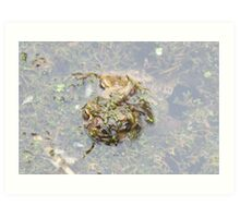 How Many Toads? Art Print